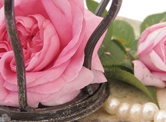The rose and the crown (Poppins' Garden) Tags: thequeenofdenmark pink rose stilllife pearl crown
