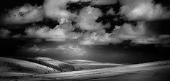 Moorland Firs (Mick Blakey) Tags: landscape cornish moody blackwhite grasses shadows contrast moor infrared bobminmoor moorland clouds black curves cheesewring cornwall monochrome white