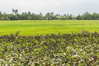 singburi - thailande 16