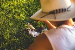 Softie (The Noisy Plume) Tags: cat kitten farm cowboy cowboyhat