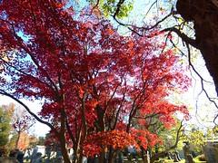 P1060647 (amiterangi1) Tags: woodlawncemetery autumn cemetery woodlawn