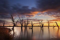 Lake Bonney (Jacqui Barker Photography) Tags: lakebonney landscape riverland rivergums silhouette deadtrees southaustralia australia longexposure bigstopper