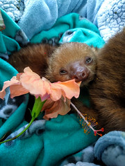Infant sloth (Hannah_Kirkland) Tags: