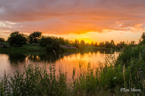 Sunset Rietplas