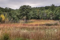 IMG_6449 (JacobBoomsma) Tags: wildriverstatepark minnesota
