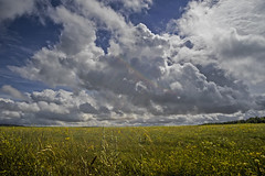 caught in a shaft of light (HHH Honey) Tags: sonya7rii tokina2035mmlens tokina salisburyplain wiltshire summer clouds cloudscape landscape yellow wildflowers umbelliferae googlenikcollection colorefex 109silver 117picturesin2017 silver 109 rainbow