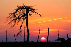 S U N B A L L (frank-heinen-photographer) Tags: landscape wallonie sonne sonnenuntergang sundown highfense outdoor fujifilm hautesfagnes moor geo:lat=5052965833 hohes venn clefay bel daemmerung sourbrodt sunset nighhtfall mood xf55200mmf3548rlmois dusk hohesvenn sun twilight fujifilmxt2 wwwfrankheinenphotographerde summer travel sumpf sommer landschaft waimes eifel geo:lon=609821388 belgien swamp geotagged