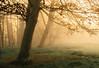 Fordham Abbey. (Adamh.) Tags: landscape forest mist autumn uk outdoors photo cano 6d 35l sunrise goldenhour light colour vsco vscofilm
