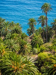 Blue and Green. (CWhatPhotos) Tags: puerto del la cruz tree green greenery nature natural atlantic ocean trees palm palms blue water tenerife going holiday holidays photographs photograph pics pictures pic picture image images foto fotos photography artistic that have which with contain olympus esystem four thirds digital camera lens 43 mft micro cwhatphotos