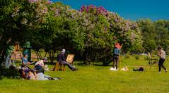 Inspiration Lilas (Be So) Tags: russie jardin parc peintres peinture fleurs lilas eté voyage personnes exterieur nature petersbourg saint