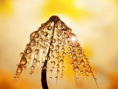 Sun shower (miss gecko) Tags: