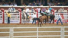 DSC02141 (♥ MissChief Photography ♥) Tags: calgary calgarystampede2017 canada rodeo horses cowboys bulls bullfighters