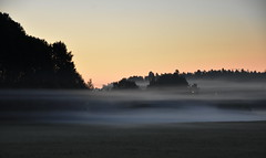 Chilly morning. (Papa Razzi1) Tags: 9296 2017 197365 chillymorning fog ghostly morning july summer sweden nikond7200 beautiful eerie