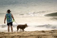 SZP_8893_pslr5 (Lakeside Annie) Tags: 2017 20170719 aussie australianshepherd bethanybeach bethanybeachde bethanybeachdelaware d7100 delaware denali july19 leannefzaras nikon nikond7100 redtri redtriaussie sarazphotography sigma sigma1770mm wednesday beachdog dog sandynose sandypaws beach delawarebeach