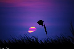 Happiness (gusdiaz) Tags: photoshop composite composition nature butterfly sunset sundown sunrise amanecer ocaso atardecer mariposa happiness felicidad beach summer vacation arena sal mar oceano hermoso relajante relaxing verano digital art arte vsco