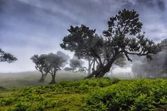 Enlightenment (*Capture the Moment* (back 4 September)) Tags: 2017 fog insel island laurel lorbeer madeira mist nebel pauldaserralowlands sonye18200mmoss sonynex7 wetter wolkenclouds foggy