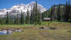 Indian Henry's (writing with light 2422 (Not Pro)) Tags: indianhenryshuntingground rangerscoutcabin mountrainiernationalpark mountrainier volcano stratovolcano coppermountain reflections pine peak firtrees meadow flowers thewonderlandtrail richborder sonya77 landscape