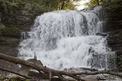 Relaxing (zamo86) Tags: nature decew falls niagara st catharines ontario waterfall bird crane