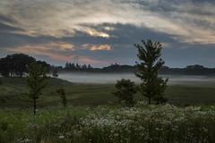 Misty-Dawn (eddee) Tags: wisconsin wauwatosa milwaukeecounty countygrounds detentionbasin urban nature environment landscape wildflowers flowers trees fog mist dawn sunrise