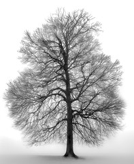 Tree in fog Just replacing my house photos, and learnig to use my new Epson SC-P800 printer this one looks stunning A2, on Hahnemule fine art paper.. (hiannieo) Tags: trees fog bw art print black white winter monochrome tree
