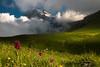 The Bravest (luigig75) Tags: gran sasso pratiditivo mountain flowers hyacinth giacinto clouds nuvole abruzzo italia italy parconazionaledelgransassoemontidellalaga 70d efs1022mmf3545usm canon landscape