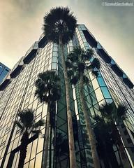 Something Corporate (Bella Bugiarda) Tags: tampa downtown cityscape city urban architecture corporate