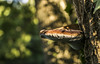 (DonPetiot) Tags: bokeh beautifulblur beautifulbokeh mushroom nature sigmalense macro amazingmacro macrodream amazingbokeh blur beautifulcolor nikon d5300 bigmushroom champignon