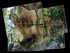 Still here (LeftCoastKenny) Tags: elcortedemaderacreek tafoni sandstone formation trees hikers joiner platform fence