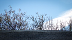 Over the Roof (Theen ...) Tags: bare blue branches clouds gaol grey hobart lumix richmond roof sky slate theen white winter
