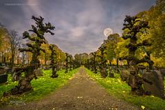 Askim, Norway 0314 - Graveyard Walkway under the full Moon (Sony A6000, Canon 10-18) (IP Maesstro) Tags: grave graveyard moon fullmoon trees night hdr askim norway landscape horror ipmaesstro