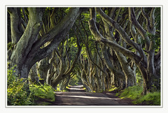 The Dark Hedges (Katybun of Beverley) Tags: thedarkhedges bregaghroad ballymoney northernireland intertwined beechtrees atmospheric gameofthrones trees shadows scenery scene scenic landscape tunnel rural outdoor magical