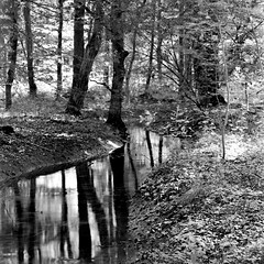 mamiyaacr292 (salparadise666) Tags: mamiya c330 sekor fuji neopan acros 100 caffenol c semistand nils volkmer tlr vintage camera analogue film landscape nature bw monohrome black white lower saxony germany hannover region square medium format 6x6