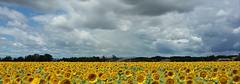 Avant l'orage (dmnq_fenot) Tags: 7dwf drôme 7dwflandscape cof024 clouds irrigation cof024mari cof024mark cof024chri nature flora