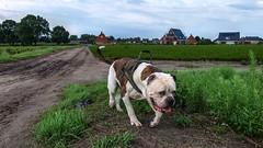 Up to no good (Skylark-Photography) Tags: nederland netherlands holland brabant noord noordbrabant north hilvarenbeek biest houtakker biesthoutakker