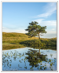 ABC_3789 (Lynne J Photography) Tags: cumbria lakedistricy kellyhalltarn sunrise nikon tarn reflection sunset lonetree lone tree waterfalls longexposure tomgillfalls