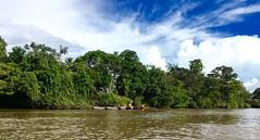 Guyane (FrançoisVéquaud) Tags: guyane fleuve lemaroni forêt apatou
