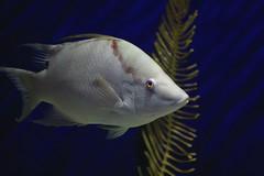 Fish (flutterbye216) Tags: aquarium fish water tank tampa florida flutterbye216