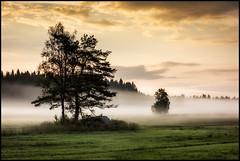 Morgondimman (Jonas Thomén) Tags: field åker dimma fog morgon morning stone sten rock klippa gräs grass träd tree trees moln clouds forest skog