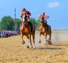 Belgian Draft Horse Race (forestforthetress) Tags: horse horses outdoor color omot nikon amish horserace rural country steamshow festival people animals