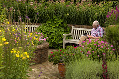 Writing his Thought for the Day? (Audrey A Jackson) Tags: canon60d rosemoorgardens devon rhs flowers garden wall path bench man colour shrubs summertime