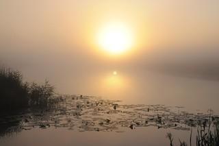 Morgens an der Alten Treeneschleife; Süderhöft, Nordfriesland (10)
