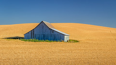 Oasis (P Matthews) Tags: wheat corrugated lonely nopeople remote field alone barn buildings farm isolated oasis landscape metal