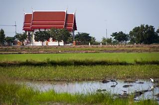 suphan buri - thailande 25