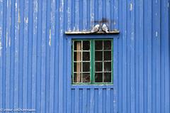 Resting (FotoRoar2013) Tags: fotoroar2013 atmosfære atmosphere atmosfera atmosphère blue blått bird canon happines interesting lofoten norway norwegen noruega norge norvegia norvege norwege nordland outdoor rc seabird seagull