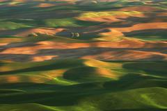 Palouse Sunrise Landscape (Rob Kroenert) Tags: palouse washington state steptoe butte thepalouse farm farmland fields late light sunset dusk rolling usa green yellow pacific northwest