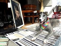 Un artículo inesperado en el escaparate! (Pigeon Little Duck) Tags: dog perro escaparate shopwindow shop tienda objeto articulo artículo object item animal