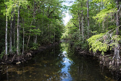 Still Waters D7C_3677 (iloleo) Tags: landscape florida looproad bigcypressnationalpreserve nikon d750 nature everglades reflection