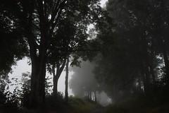 . (jacques.missud) Tags: promenade brume brouillard fog arbres chemin cantal auvergb auvergne