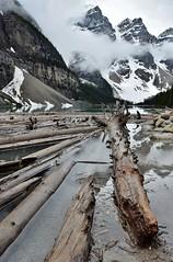 Logs (naromeel) Tags: banff canada nature