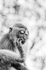 Let me think (dhawan_anita) Tags: monochrome schwarz weiss animals monkey expressions